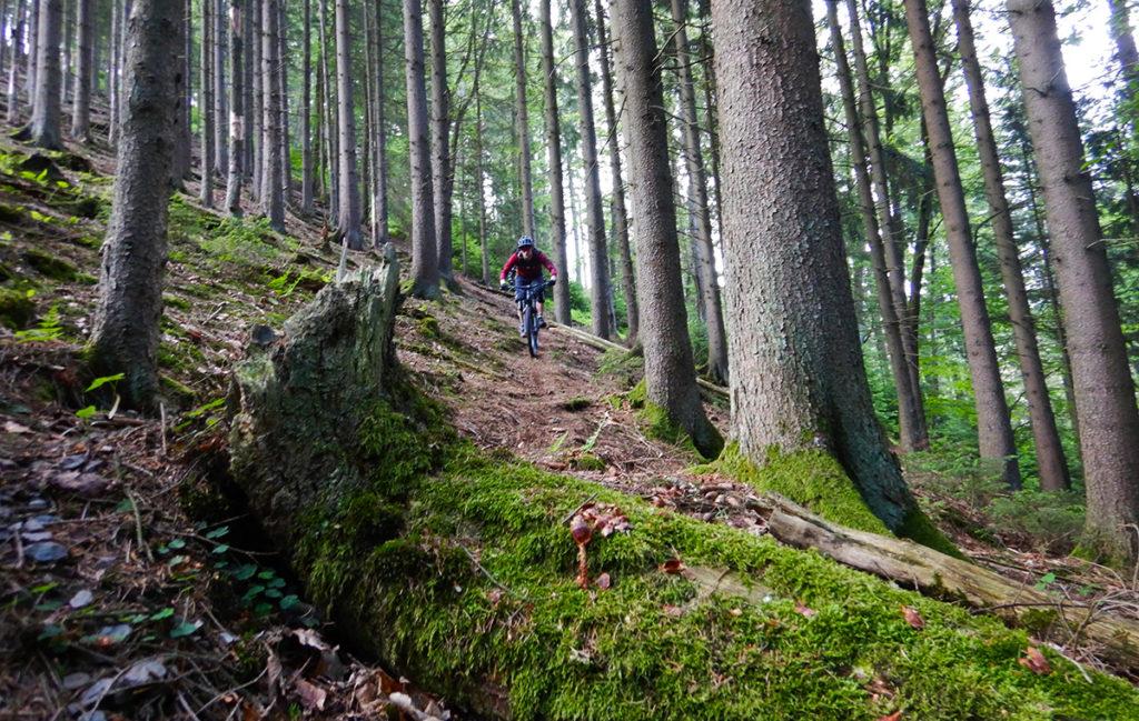Enduro trail Reinhardstein