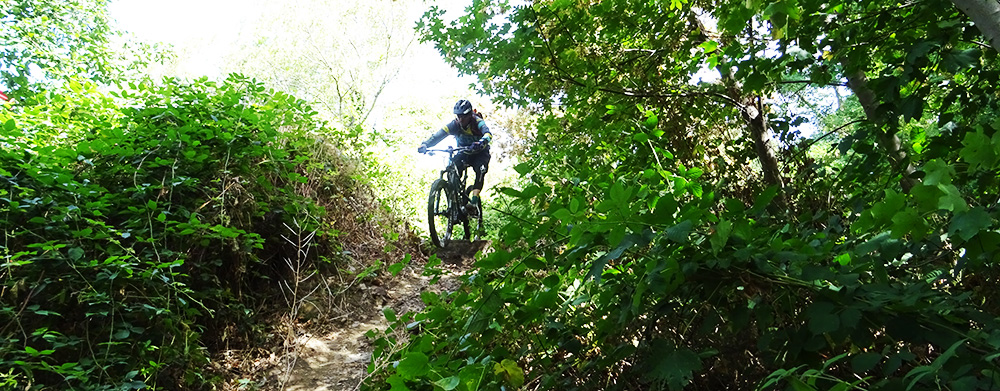 Basta bikes rider is dropping in the trail
