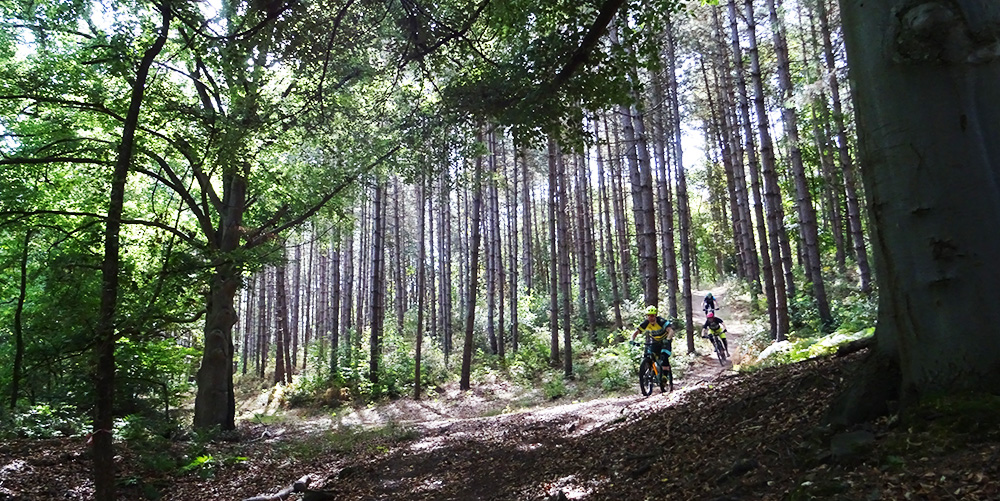 big forest trees with a group mountainbikers riding down in Chaudfontaine