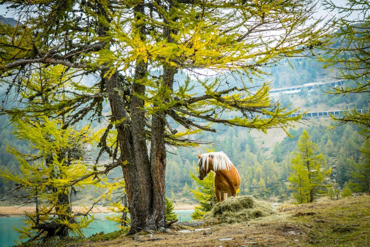 homeoftrails-graubuendenbike-wild-horse-1280x853