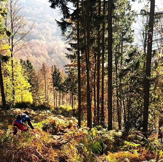 witten_trail_herfst_kleuren